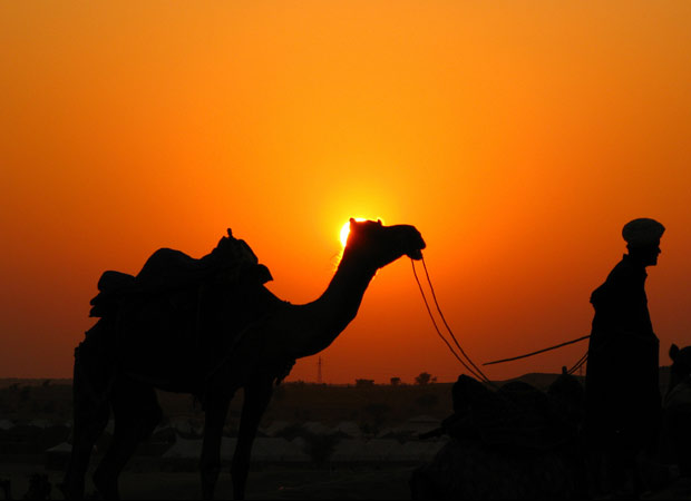 Annoyed from heat, Camel chews head of his owner in Barmer