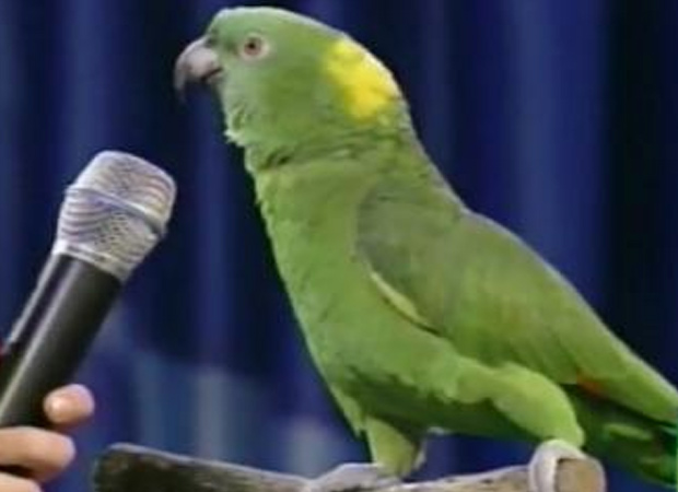 Bizarre! Parrot becomes eyewitness to murder in United States