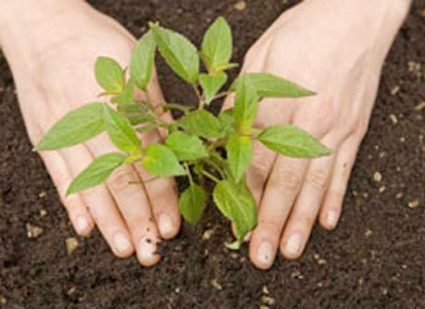 UP to enter Guinness record by planting 5cr saplings on July 11