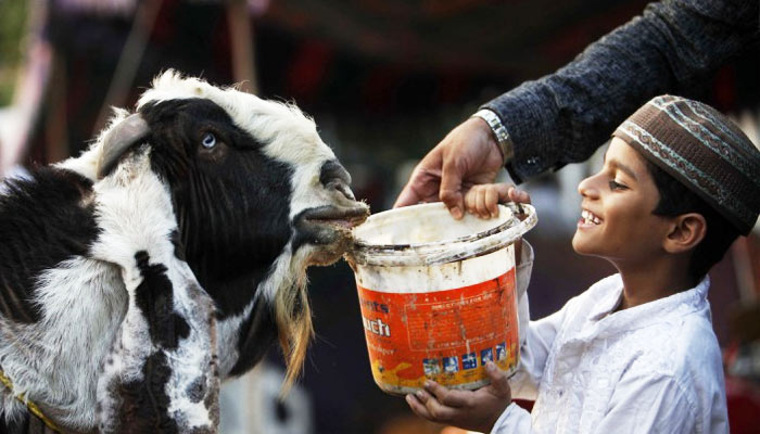 UP residents file PIL in SC against sacrifice of animals on Bakr-Eid