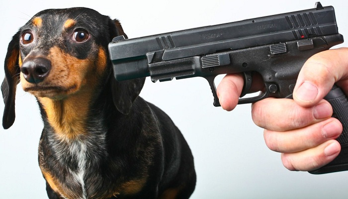 Government official kills dog brutally,