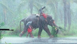 Relief from Heat | Monsoon hits Kerala on Tuesday