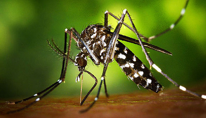 Zika virus infections could cause eye diseases: Study