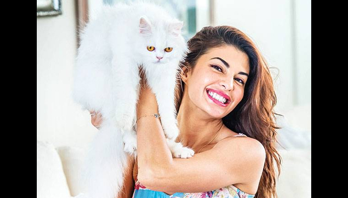 Jacqueline urges people to remain responsible towards animals