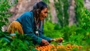 Climate change effect: Ladakhi tribe no longer vegan
