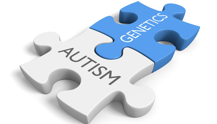 Gene responsible for autism identified