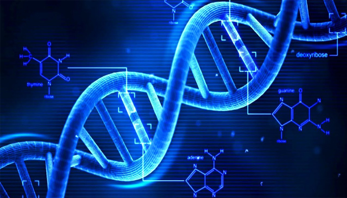 Analyzing DNA will help predict the life span of a person: Study
