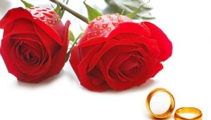 Happy Rose Day : WhatsApp quotes and messages for your loved ones