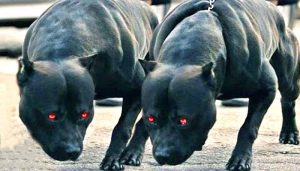 Dangerous Dog breeds that are enlisted as the 'Most ferocious Dogs'