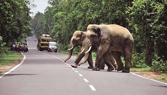 Jkhand to bear edu cost of children if family head killed in elephant attack