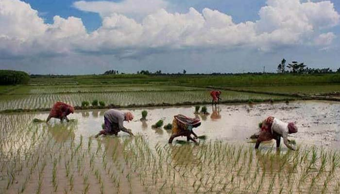 No cause of concern about monsoon; sowing to pick up: Govt