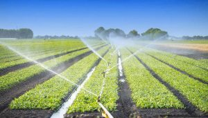 Not enough water in reservoirs for irrigation: Odisha minister