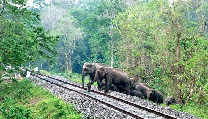 U'Khand govt to install new technology to combat train-elephant collisions