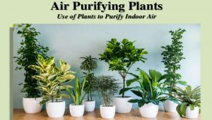 Check out these air purifying plants to fight pollution!!!