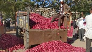 MMTC signs 2nd onion import order, to buy 11,000tn from Turkey