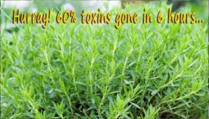 These 5 plants will 'get out' toxins from the air you breathe