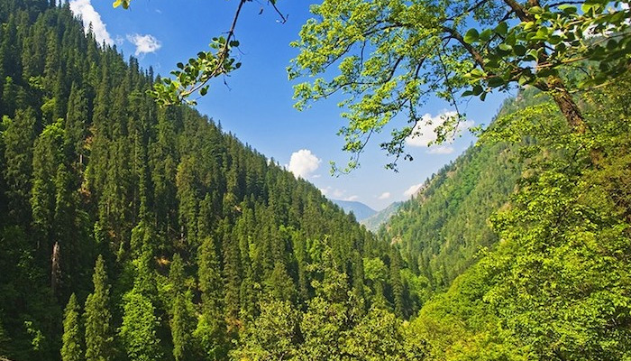 Two sites identified in Chamba for eco-tourism: HP Forest minister