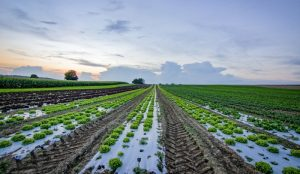 Current State of Indian Agriculture and Allied Industries