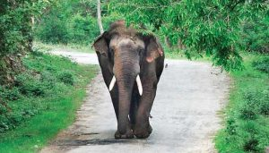 Two persons trampled to death by wild elephant in Odisha