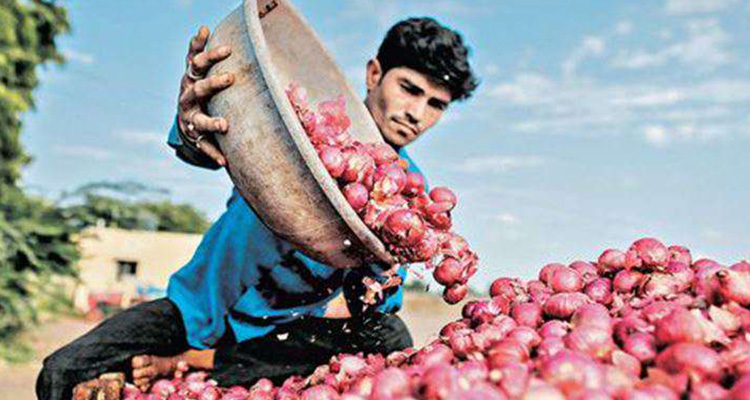 Government to allow onion export from March 15