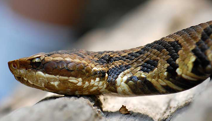 Hospital asked to pay Rs 8 lakh to snake-bite victims kin