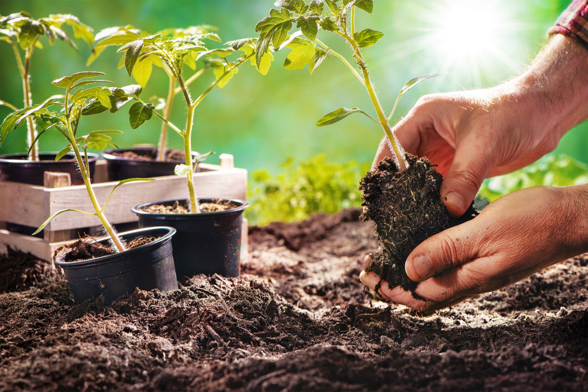 Gardening Tip: How to use Eggshells For Your Plants