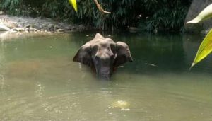 Kerala Pregnant Elephant's death: First accused under arrest