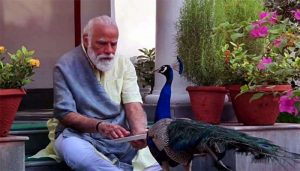PM Modi Shares Heartwarming Video of his Precious Bond with Peacocks