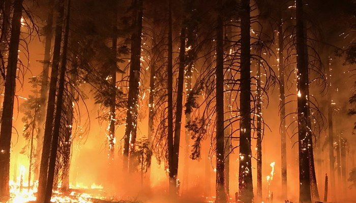 10 dead as California fire becomes deadliest of year