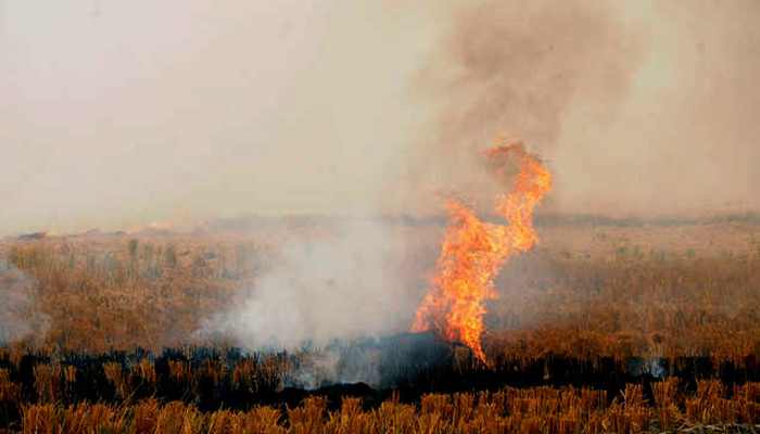 SC notice to Centre, others on plea to ban stubble burning