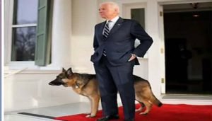 POTUS-elect Biden to bring 'DOTUS – Dogs of the United States' to White House