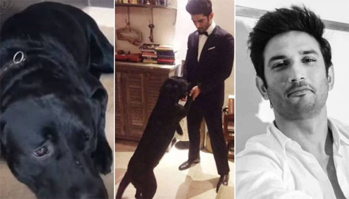 Adorable video of Sushant Singh Rajput's dog Fudge goes viral; Leaves fans emotional