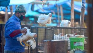 119 birds found dead in Maharashtra; 10 States confirm Bird Flu Outbreak