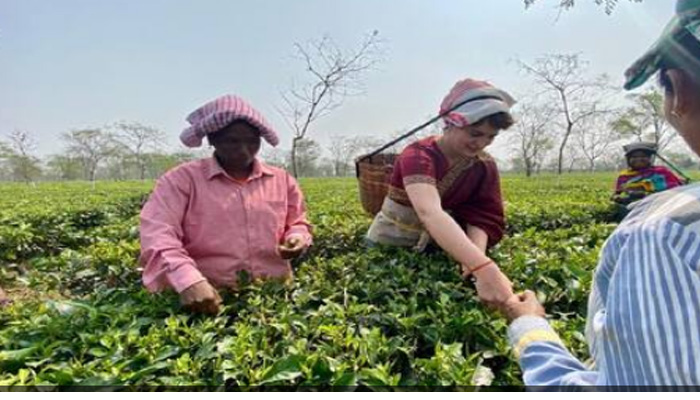 Priyanka Gandhi on Mission Assam; Plucks tea leaves with Workers