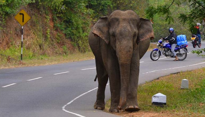 Man trampled to death while taking selfie with elephant
