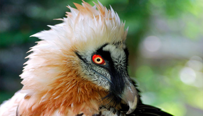 Fifteen vulture species facing extinction set to get global protection