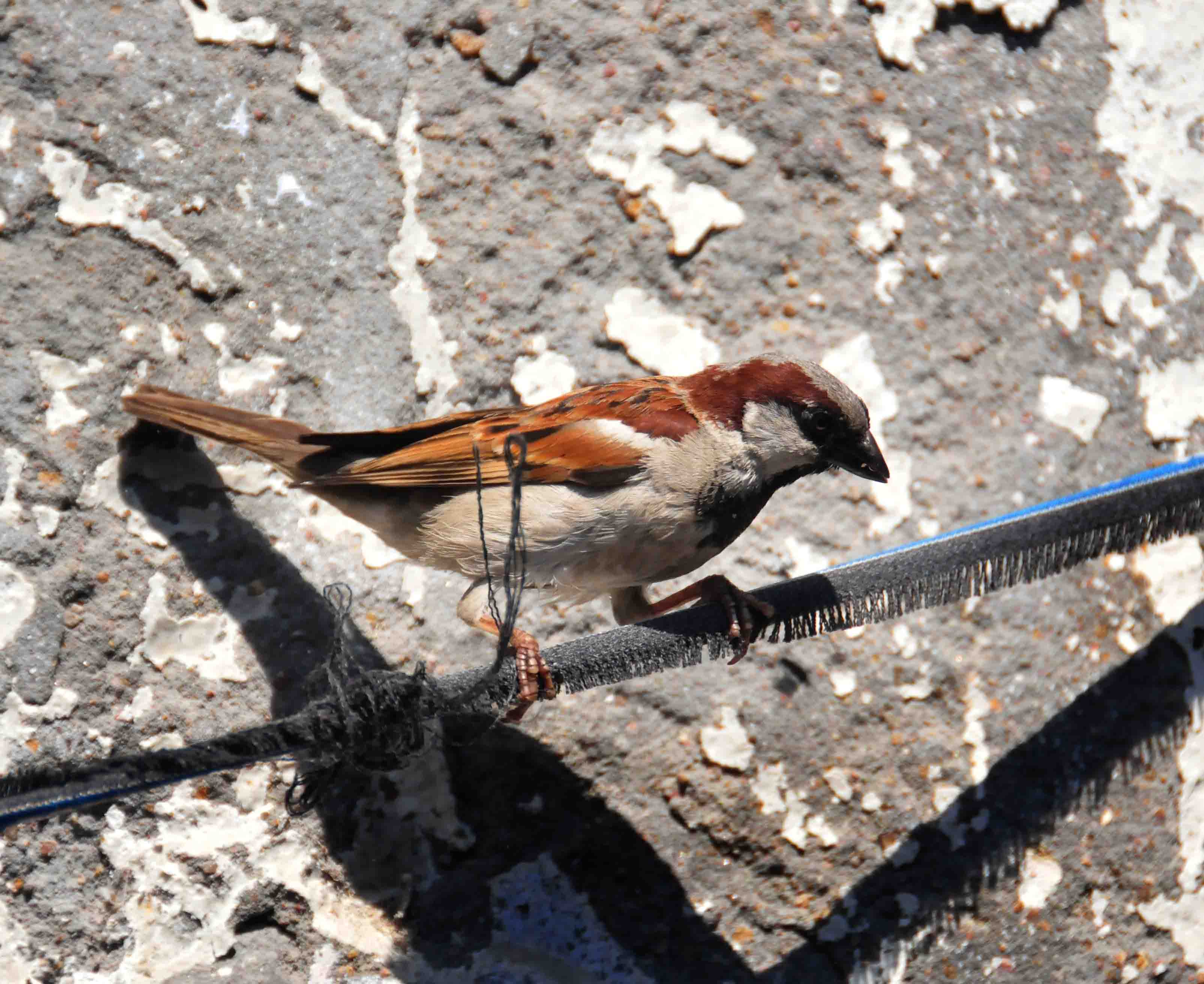 World Sparrow Day: No one can tell stories, that you do