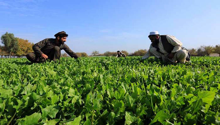 Afghanistan seeks agriculture tie-ups with India