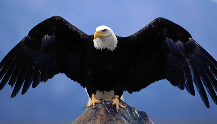 Seven leadership principles we should learn from Eagles   Read